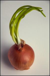 120526 The Onion