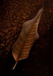September 18, 2014 -©2014 Robert Nease