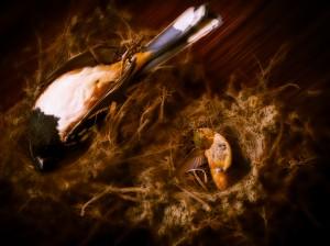 Two Dead Birds