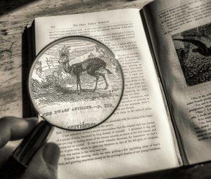 """Jeremy green """"Deer Reader,"""" 8/10/16"""
