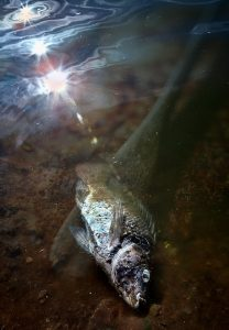 """David B Moore """"Unknown Waters Ahead"""" 08/01/16"""