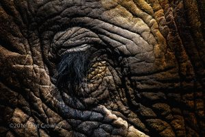 "Eliot Crowley ""Elephant's Eye"