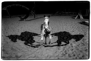 "Russ Widstrand ""Night Horse"" 9/08/16"