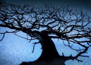 "Russ Widstrand ""Helga's Tree"" 09/28/16"