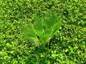 """Blue Fier """"Green on Green"""" 11/12/16"""
