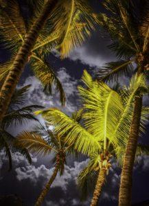 "Steve Mason ""Moon and Palms""10/12/18"
